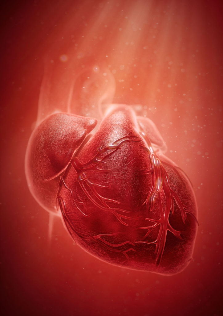 cgi medical illustration of a human heart