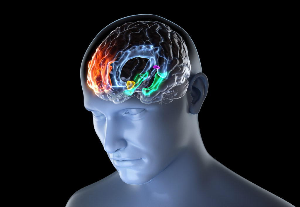 cgi medical illustration of a brain