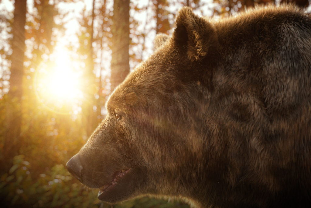 cgi illustration of a brown bear in the woods