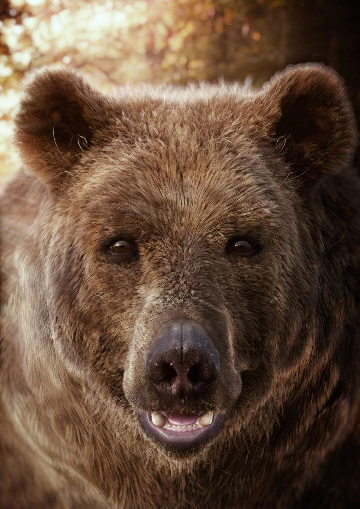 cgi animal portrait of a brown bear