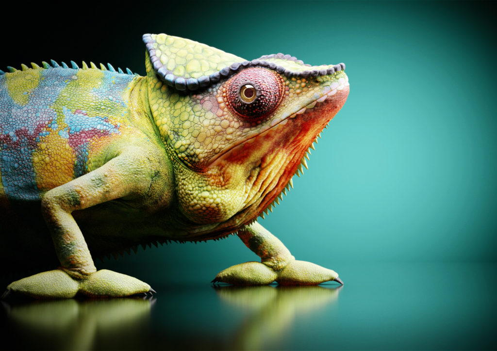 Cgi chameleon in a studio environment